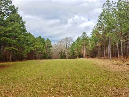 Claiborne County Big Buck Paradise : Pattison : Claiborne County : Mississippi