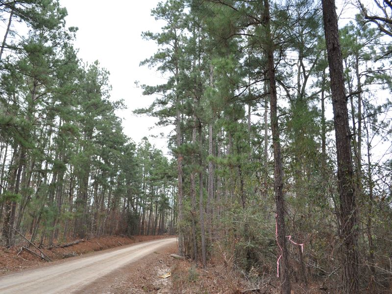 628 Ac Willow Springs Road : New Waverly : San Jacinto County : Texas