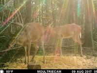 Hunt Big Deer On Your Place Clos : Sulphur Springs : Benton County : Arkansas