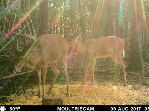Hunt Big Deer On Your Place Clos : Sulphur Springs : Benton County : Arkansas
