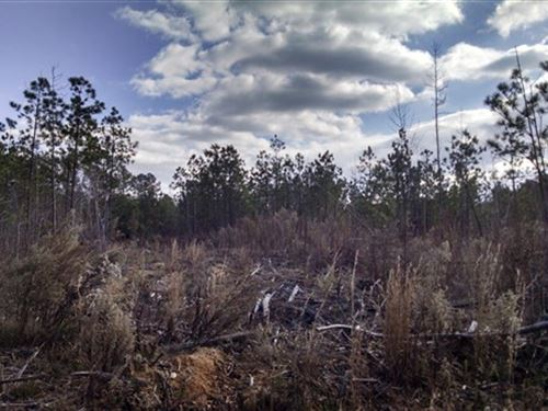 51.02 Acres - Fairfield County, Sc : Blair : Fairfield County : South Carolina