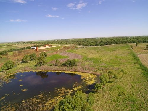 Pheasant Hunters Paradise : Damar : Rooks County : Kansas