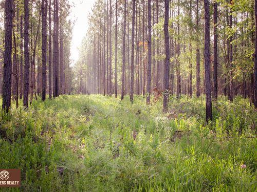 Hunting / Timber Investment : Bainbridge : Decatur County : Georgia