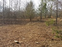 Secluded Wooded Tract : Bremen : Cullman County : Alabama