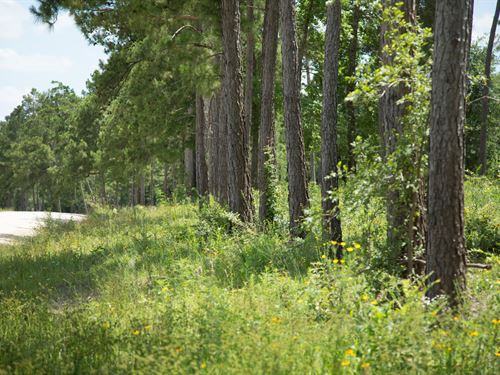 13.19 Ac Tract 17 Iron Star : Huntsville : Walker County : Texas