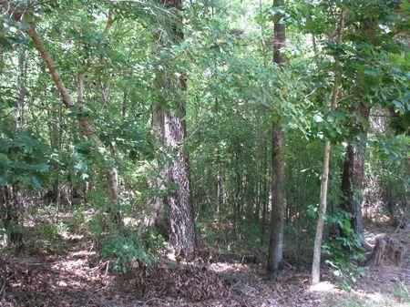 Garrett 235 : Old Texas : Monroe County : Alabama