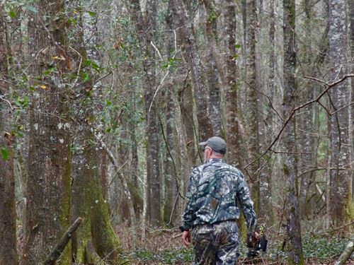 Prime Hunting For Trophy Whitetail : Ochlocknee : Thomas County : Georgia