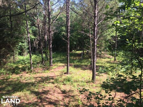 85 Acres of Hunting Paradise : Banner : Calhoun County : Mississippi