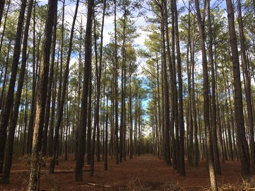 Frontage On Little Singletary Lake : White Oak : Bladen County : North Carolina