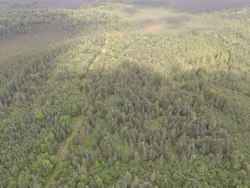 80 Acres Hunting Land For Sale in : Butternut : Ashland County : Wisconsin