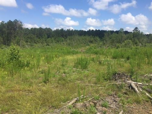 Land For Sale Owner Financing North : McComb : Pike County : Mississippi