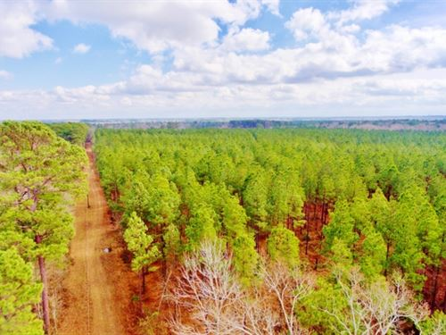 55 Acre Timber/Recreational Acreage : Keatchie : De Soto Parish : Louisiana