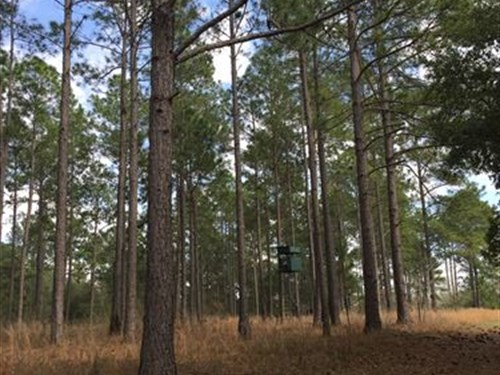 Beautiful Rolling Timber/Rec Tract : Camilla : Mitchell County : Georgia
