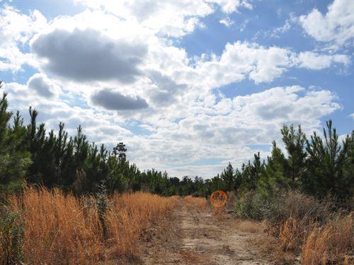 88 Ac Fm 247 : Huntsville : Walker County : Texas