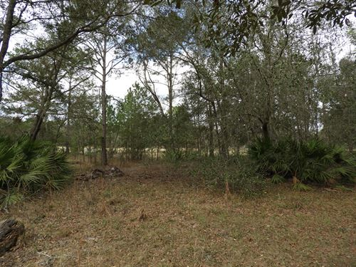 6 Wooded Acres. Priced To Sell : Hawthorne : Alachua County : Florida