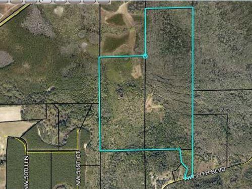 Great Established Hunting Property : Jennings : Hamilton County : Florida