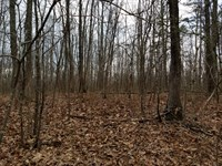 43.5+/-Acres Beautiful Woods/Creek : Altamont : Grundy County : Tennessee