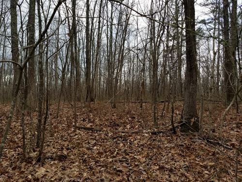 10.34+/- Acs Excellent Hunting Land : Sewanee : Marion County : Tennessee