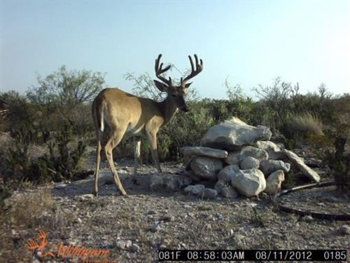 Hunting Ranch : Dryden : Terrell County : Texas