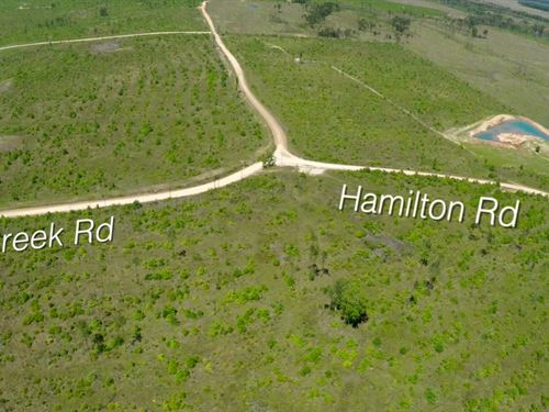 283 Acres Hamilton Road : Groveton : Trinity County : Texas