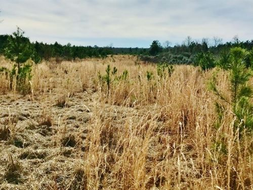 Fenced Pasture Land Mixed Trees For : Tylertown : Walthall County : Mississippi