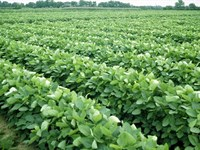 62 Acres of Farmland For Sale With : Parsons : Labette County : Kansas