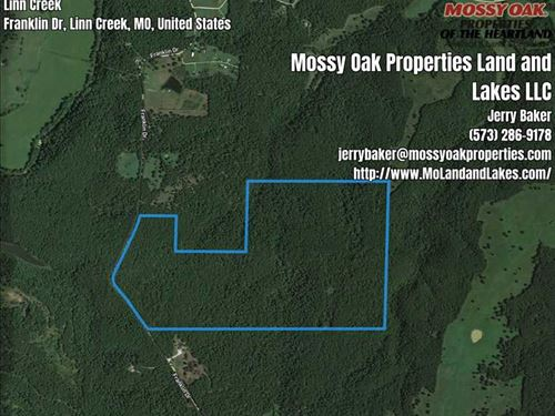 253 Acres Of Timber Ground Priced : Montreal : Camden County : Missouri