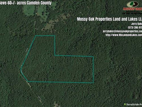 60 Acres Of Excellent Hunting : Montreal : Camden County : Missouri