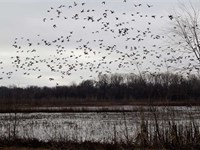 Reduced 200 Acre Recreational : Concordia : Johnson County : Missouri