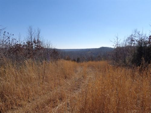 Tn Land, Owner Financed, Location : Hampshire : Lewis County : Tennessee