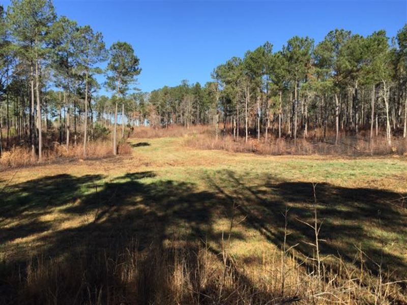 Pines, Fields And Great Hunting : Farm for Sale in Pine ...