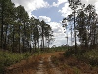 Productive Timber And Farmland : Pearson : Atkinson County : Georgia
