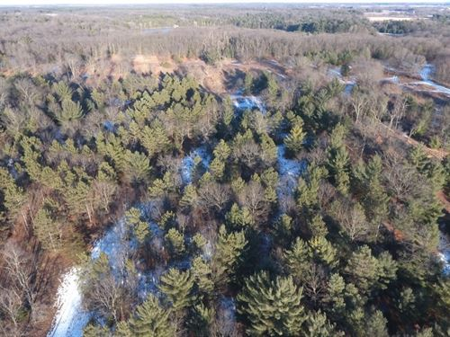 Large Buildable/Hunting Parcel : Oxford : Adams County : Wisconsin