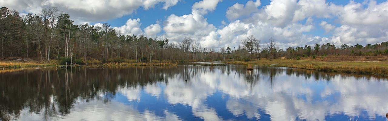 Twin Ponds Plantation : Sparta : Hancock County : Georgia