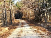 617 Ac Timberland With Great Recre : North East Hardeman : Hardeman County : Tennessee