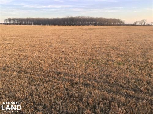 40 Acres Row Crop Farm on Raft : Searcy : White County : Arkansas