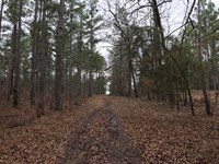 253 Acre Hunters Paradise For Sale : Mantee : Webster County : Mississippi