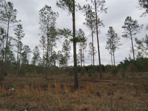 Peurifoy Tract 1 : Walterboro : Colleton County : South Carolina