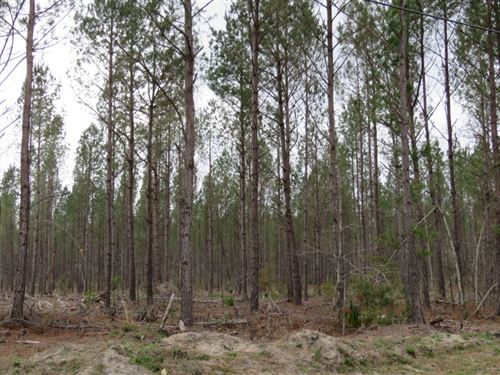 Peurifoy Tract 3 : Walterboro : Colleton County : South Carolina