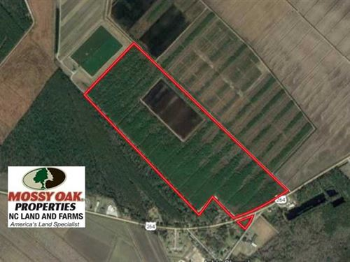 Reduced, 151 Acres of Duck Huntin : Swan Quarter : Hyde County : North Carolina
