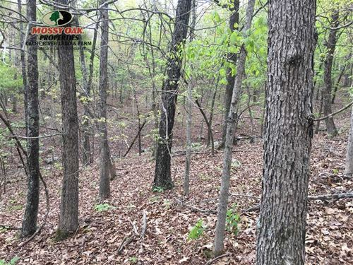 Price Drop, Open Hardwoods in Re : Hardy : Sharp County : Arkansas
