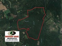 Reduced, 822.23 Acres of Hunting : Kingstree : Williamsburg County : South Carolina