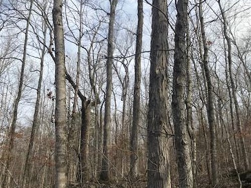 193.01+/- Acres Marketable Timber : Beersheba Springs : Grundy County : Tennessee