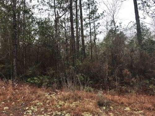 44.23 Acres In Forrest County, Ms : Brooklyn : Forrest County : Mississippi