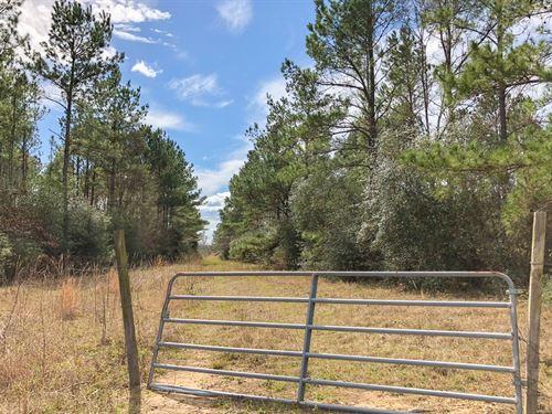 11.57 Ac Fm 230 Kittrell Acres : Trinity : Walker County : Texas
