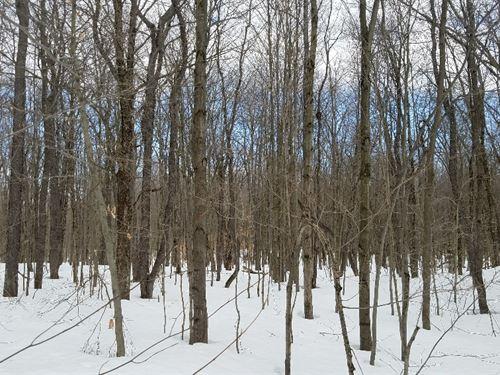 Borders State Land - Near Salmon Ri : Orwell : Oswego County : New York