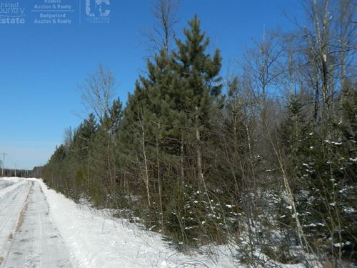 Buildable Wooded Site In Sawyer Cty : Ojibwa : Sawyer County : Wisconsin