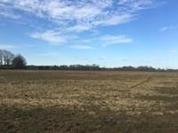 24-042 Glenwood Row Crop Hunting : Luverne : Crenshaw County : Alabama