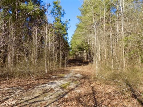 Wooded Acreage With Creek : Jefferson : Chesterfield County : South Carolina