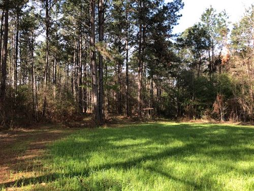 Beautiful Wooded Acres In Ms : Gloster : Amite County : Mississippi